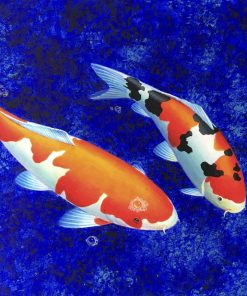 Two Koi Fish oil painting